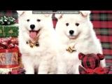 «новый год и рождество  с милыми собаками и щеками )))» под музыку Новогодние песни - Джингл Белс. Picrolla