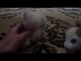 The cat collection Принцесса клип Уходи и дверь закрой